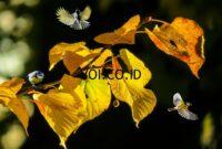 Contoh-Seni-Rupa-2-Dimensi-Fotografi