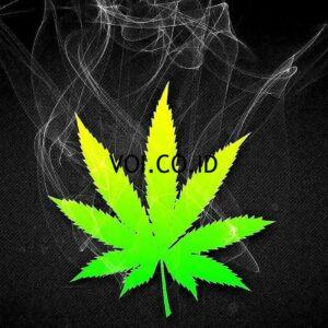 Contoh-Slogan-Narkoba