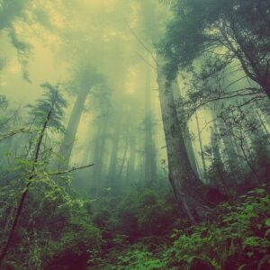 Contoh-Teks-Eksposisi-Lingkungan