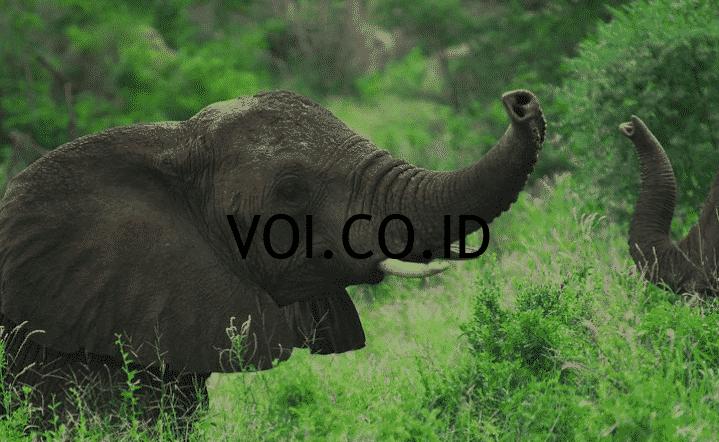 Contoh-Ekosistem