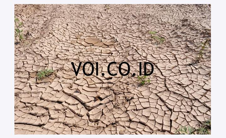 Contoh-Pencemaran-Lingkungan