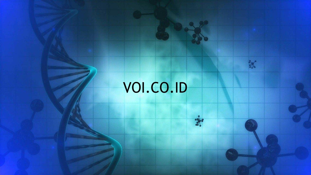 Fungsi-DNA