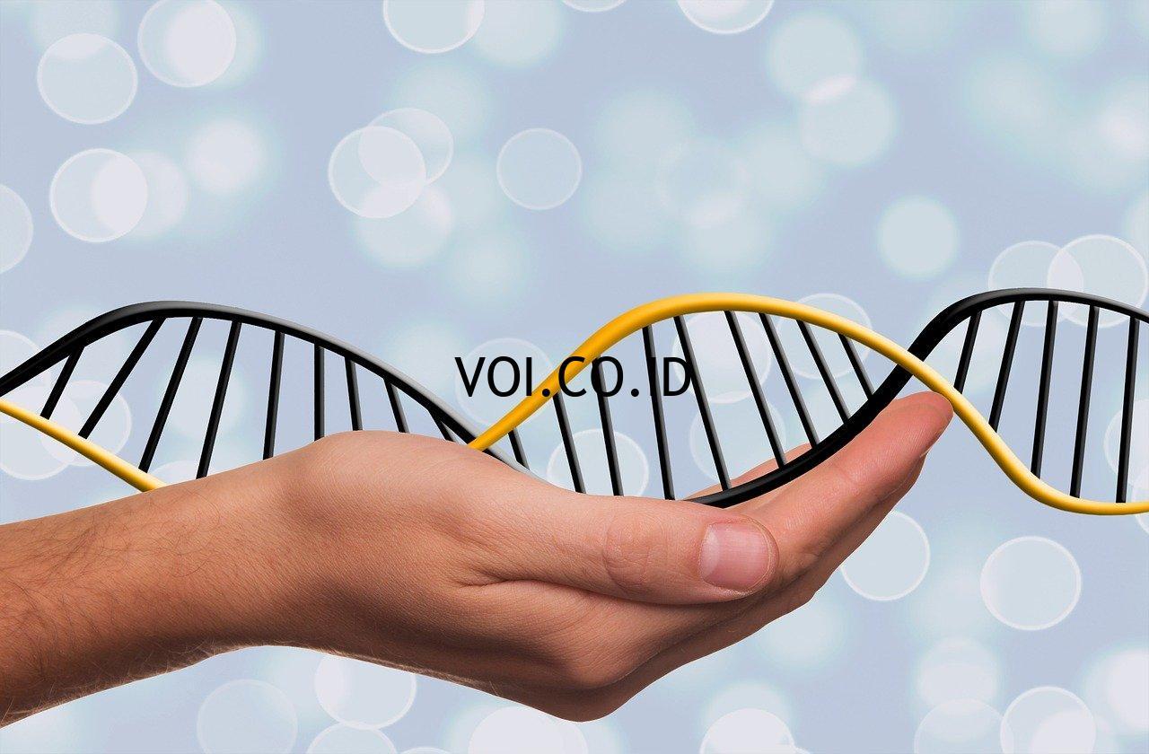 Struktur-DNA