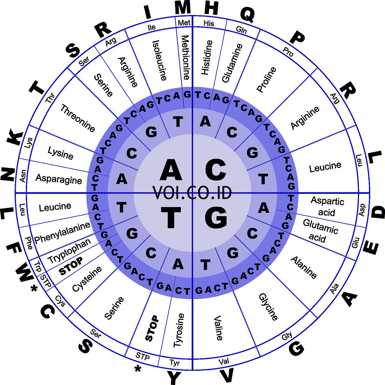 Komponen-Penyusun-DNA