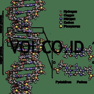 Skema DNA