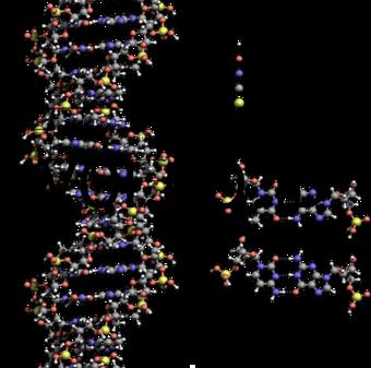 Skema-DNA